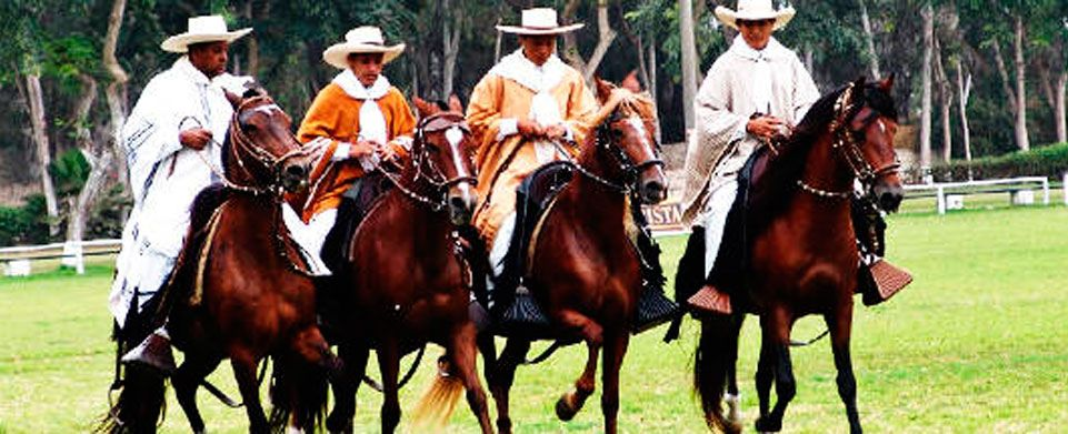 The Peruvian Paso Horse