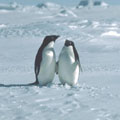 Luxury Tours in Antarctica